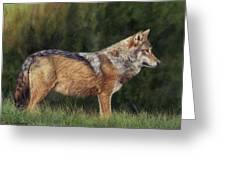 European Grey Wolf Greeting Card