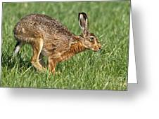 European Hare Greeting Card