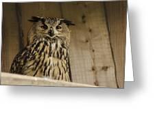 European Owl Greeting Card