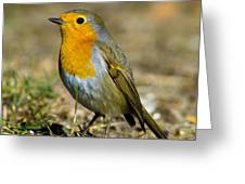 European Robin Square Greeting Card