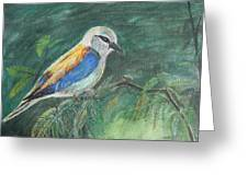 European Roller Greeting Card