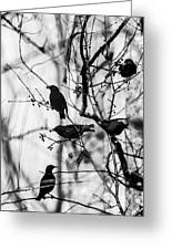 European Starlings Greeting Card