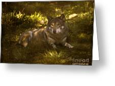 European Wolf Greeting Card