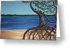 Evans Landing Mangroves Greeting Card