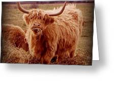 Even Cape Breton Cattle Have Character Greeting Card