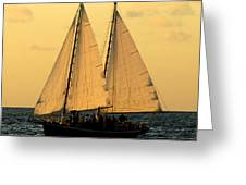 More Sails In Key West Greeting Card