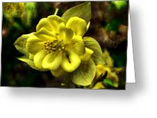 Evening Floral Greeting Card