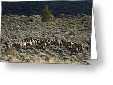 Evening Herd Of Elk   #7640 Greeting Card