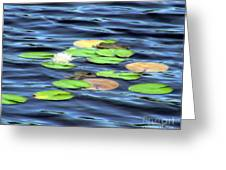 Evening Lake With Water Lily Greeting Card