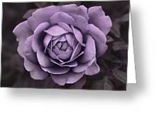 Evening Lavender Rose Flower Greeting Card