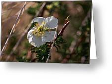 Evening Light On An Apache Plume  Greeting Card