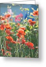 Evening Lights The Poppies Greeting Card