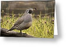 Evening Quail Greeting Card by Melisa Meyers