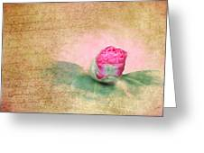 Evening Rosebud Greeting Card
