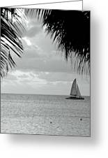 Evening Sail In Paradise Greeting Card