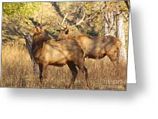 Evening Sets On The Elk Greeting Card