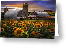 Evening Sunflowers Greeting Card