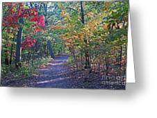 Evening Walk Thru The Woods Greeting Card