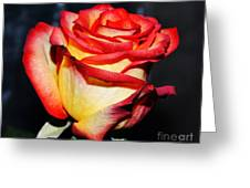 Event Rose 3 Greeting Card