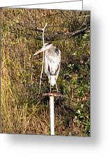 Ever Watchful Blue Heron Greeting Card