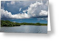 Everglades 0254 Greeting Card