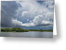 Everglades 0257 Greeting Card