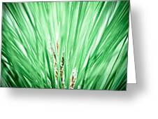 Everglades 10 Greeting Card