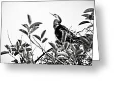 Everglades 20 Greeting Card