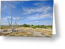 Everglades Coastal Prairies Greeting Card