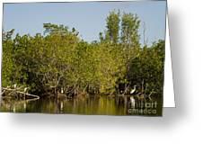 Everglades'  Egrets Greeting Card