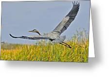 Everglades Flight Greeting Card