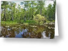 Everglades Lake Greeting Card