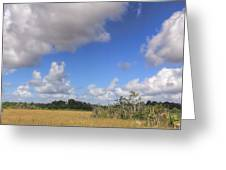Everglades Landscape Panorama Greeting Card