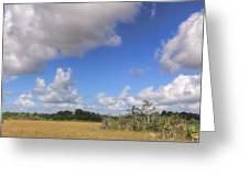 Everglades Landscape Panorama Greeting Card