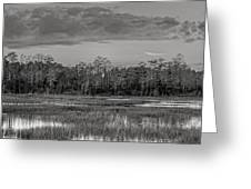 Everglades Panorama Bw Greeting Card