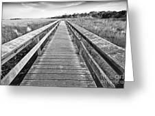 Everglades Trails Greeting Card