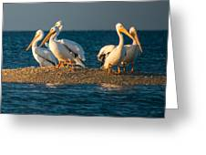 Everglades White Pelicans Greeting Card