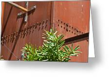 Evergreen Against Rust Greeting Card