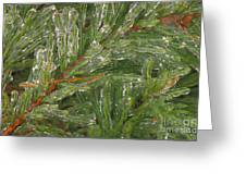 Evergreen Covered In Ice Greeting Card