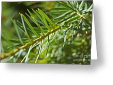 Evergreen Dream By Jrr Greeting Card