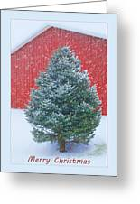 Evergreen In Winter 2 Greeting Card