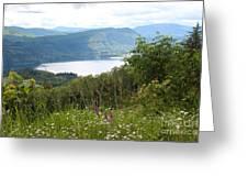 Evergreen Overlook Greeting Card