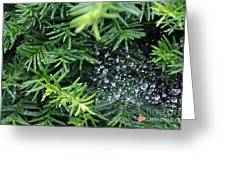 Evergreen Rain Greeting Card