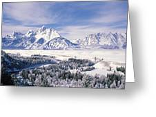 Evergreen Trees On A Snow Covered Greeting Card