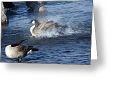 Everyone Duck Greeting Card