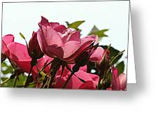 Everything Looks Rosy Greeting Card