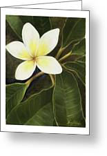 Everywhere In Hawaii Greeting Card by Nancy Edwards