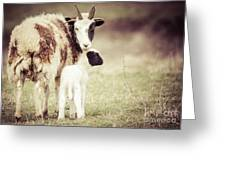 Ewe And Young Greeting Card