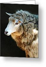 Ewe Are So Beautiful Greeting Card