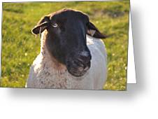 Ewe Bet I'm Cute Greeting Card